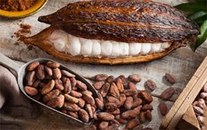 Теобромин – это горький алкалоид растения какао
