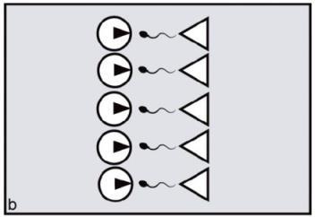 Рисунок B. Самки, нуждающиеся во времени и энергии самцов, должны синхронизировать свои циклы, что не даст развиться монополии самца.