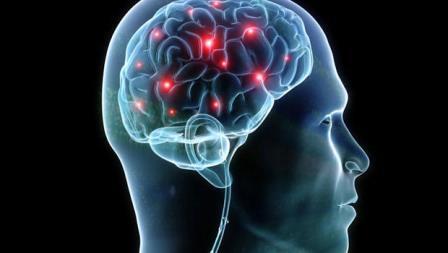Нейроактивные стероиды быстро изменяют возбудимость нейронов путем взаимодействия с лигандами ионных каналов и другими рецепторами клеточной поверхности.