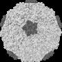 test:265px-rhinovirus.png