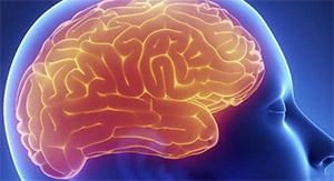 Влияние тестостерона на головной мозг
