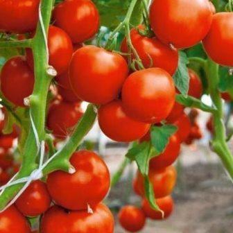 Ликопин содержится в томатах