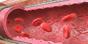 Ункария: эндотелий