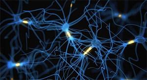 Витамин Е: нейротрансмиссия серотонина