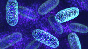 Витамин К: митохондрии
