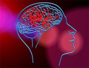 Японский горец: неврология и мозг