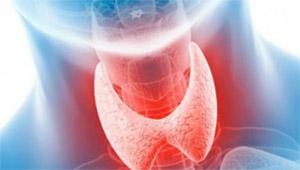 Влияние женьшеня на гормоны щитовидной железы